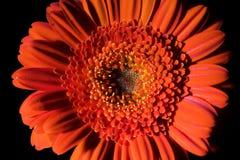 Orange Blumen-Aufbau 1. Stockfotos