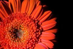 Orange Blumen-Aufbau 2. Stockbilder