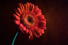 Orange Blumen-Aufbau 5. Stockbild