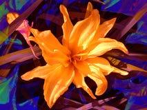 Orange Blumen-Blumenblatt-Blüten Stockfotos