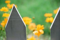 Orange Blumen in der Blüte Lizenzfreie Stockbilder