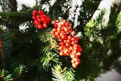 Orange Blumen der grünen Kiefer des Winters und grüne Blätter, natürlicher Hintergrund Stockfotografie