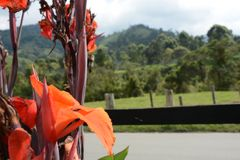 orange Blumen in der Straße stockfotografie