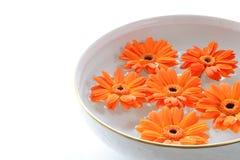 Orange Blumen, die in eine Schüssel mit Wasser schwimmen lizenzfreie stockfotografie