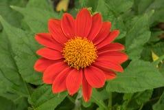 Orange Blumenblüte und Unschärfehintergrund Stockbild