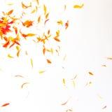 Orange Blumenblathintergrund Lizenzfreies Stockbild