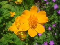 Orange Blumenblattblume 1 lizenzfreie stockfotografie
