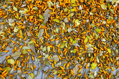 Orange Blumentropfen auf dem Boden Lizenzfreie Stockfotos