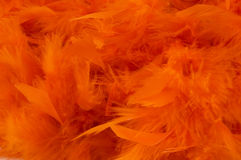 Orange boa background Royalty Free Stock Images