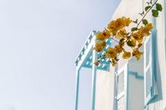 Orange bougainvillea, paper flowers stock photo