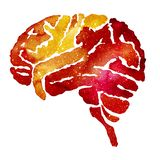 Orange brain with galaxy effect. Hand painted human brain silhouette with galaxy watercolor effect. Watercolor red-orange illustration on white backdrop. Medical stock photos