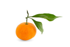 Orange with branch Stock Images