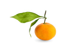 Orange with branch Stock Photo