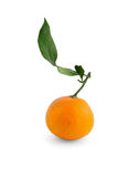 Orange with branch Stock Image