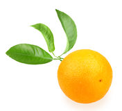 Orange and branch Stock Photography