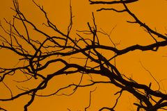 Orange branches Royalty Free Stock Photography