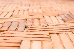 Orange brick pavement Royalty Free Stock Photos