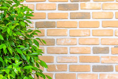 Orange brick wall decorate with green leafs. Orange brick wall decorate with green leaf Stock Images