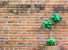 Orange brick wall decorate with small plant Royalty Free Stock Photography