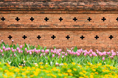 Orange brick wall with flower garden for pattern Royalty Free Stock Photography