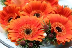 Orange bridal daisies. Orange buttonholes made out of fresh daisies on white plate Royalty Free Stock Image