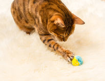 Orange brown bengal cat on wool rug Royalty Free Stock Photo