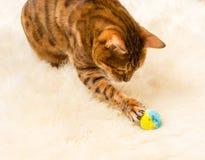 Orange brown bengal cat on wool rug royalty free stock photo
