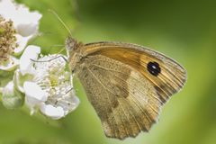 An orange and brown butterfly on Southampton Common royalty free stock photo