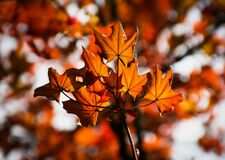 Orange and Brown Leaf Stock Photography