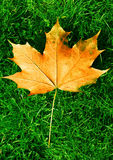 Orange and brown leaf on grass. Autumn Royalty Free Stock Photography