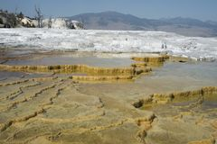 Mammoth Hot Springs Terrace geysers, Yellowstone Royalty Free Stock Images