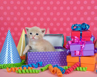 Orange buff kitten in birthday box with presents and party hats Stock Images