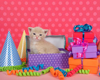Orange buff kitten in birthday box with presents and party hats Stock Image