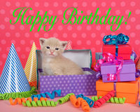 Orange buff kitten in birthday box with presents and party hats Royalty Free Stock Photo