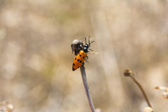 Orange bug on field day light close up composition photography Royalty Free Stock Photo
