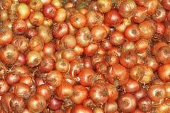 Orange bulb onion relish shine Royalty Free Stock Image