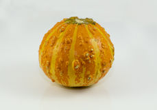 Orange and bumpy gourd used for decor or cooking Stock Image