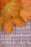 An orange bunch of autumn leaves Royalty Free Stock Photography