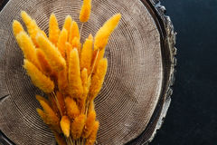 orange bunny(rabbit) tail grass, lagurus dry flower bouquet on w Stock Photography