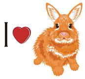 I love bunny. Orange bunny sot with red heart and letter i Stock Image