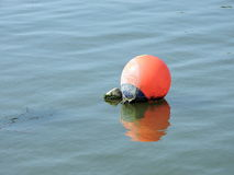 Orange buoy Stock Image