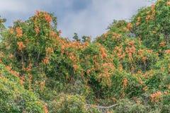 Orange Busch stockbilder