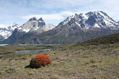 Orange Bush, Patagonia Stock Images
