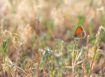 Orange buttefly sur le pré d'été photographie stock