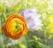 Orange  buttercup in bouquet in sunshine Stock Photography