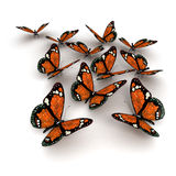 Orange butterflies Royalty Free Stock Photo