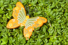 Orange butterflies Stock Photos