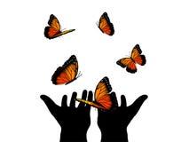 Orange butterflies Stock Photo