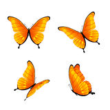 Orange butterflies vector illustration