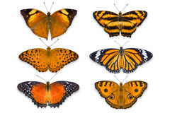 Orange butterflies on white background. Close up of orange butterflies isolated on white background with clipping path, including Peacock Pansy, Autumn Leaf royalty free stock photography